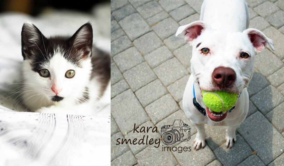 Graphic Design: Pet Photography Business Cards | Kara Smedley Images